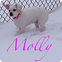 Adopt A Pet :: Molly - Lincolnwood, IL
