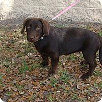 Adopt A Pet :: Kalie - Oviedo, FL