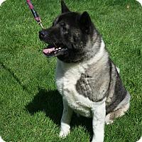 Adopt A Pet :: Cami & Fringe - Salem, OR