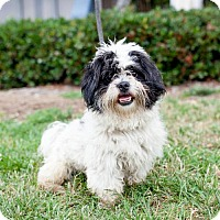 Adopt A Pet :: Manzano - San Diego, CA