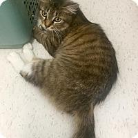 Adopt A Pet :: Jenna - Webster, MA