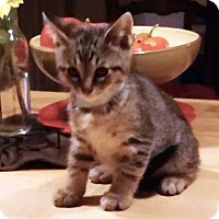 Adopt A Pet :: Jacopo - Austin, TX