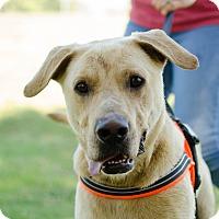 Adopt A Pet :: Hornet - Greenwood, SC