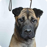 Adopt A Pet :: FINCH - Ukiah, CA