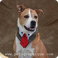 Adopt A Pet :: Feliz aka Harley - Las Vegas, NV