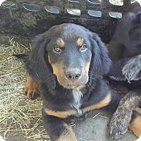 Adopt A Pet :: Zeus (adoption pending) - Matawan, NJ
