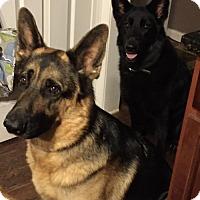 Adopt A Pet :: Blaze - Decatur, GA