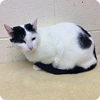 Adopt A Pet :: Lilly - Janesville, WI
