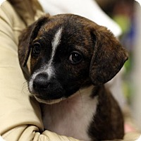 Adopt A Pet :: Lewis - Danbury, CT