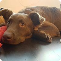 Adopt A Pet :: Dean Forester - Jersey City, NJ