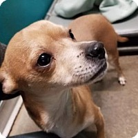 Adopt A Pet :: Emmett - Spokane, WA