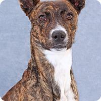 Adopt A Pet :: Mielas - Encinitas, CA