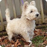 Adopt A Pet :: Toby - Bedminster, NJ