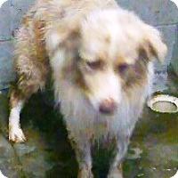 Adopt A Pet :: Bolt - Oswego, IL
