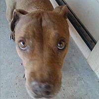 Adopt A Pet :: JASMINE 4 - Chandler, AZ