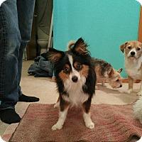 Adopt A Pet :: Mac - Bellingham, WA