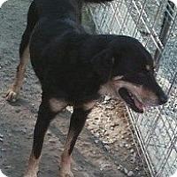 Adopt A Pet :: Leigh Anne - Midlothian, VA