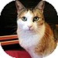Adopt A Pet :: Mama - Vancouver, BC