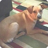 Adopt A Pet :: Max - Croton, NY