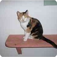 Adopt A Pet :: Yetti - Hamburg, NY