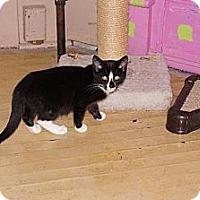 Adopt A Pet :: Theo - Tarboro, NC