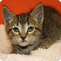 Adopt A Pet :: GRANT - SILVER SPRING, MD