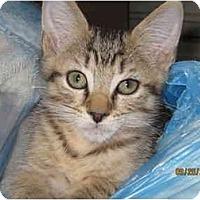 Adopt A Pet :: Johnny - Catasauqua, PA