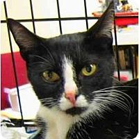 Adopt A Pet :: Nellie - Plainville, MA