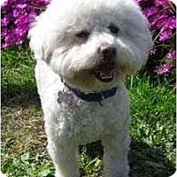 Adopt A Pet :: Justin - La Costa, CA
