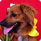 Adopt A Pet :: Cinnamon