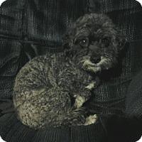 Adopt A Pet :: Petie - Carey, OH