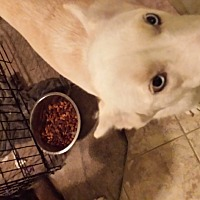 Adopt A Pet :: Eva - Jacksonville, NC