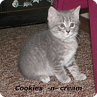 Adopt A Pet :: Cookies n Cream - Dover, OH