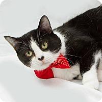 Adopt A Pet :: Lucci - Schererville, IN