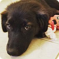 Adopt A Pet :: Gin - Scottsdale, AZ