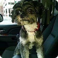 Adopt A Pet :: Rascal - Jacksonville, FL