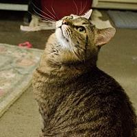 Adopt A Pet :: Anja - Eldora, IA