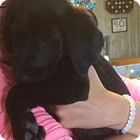 Adopt A Pet :: Tayla - Homer, NY
