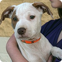 Adopt A Pet :: Tanner - Palmdale, CA