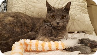 Domestic Shorthair Cat for adoption in Staten Island, New York - Mary Jane