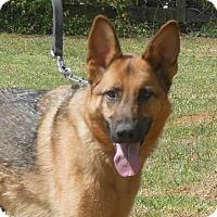 Adopt A Pet :: Greta - Holly Hill, SC