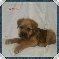 Adopt A Pet :: Eli - Chester, IL
