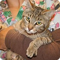 Adopt A Pet :: Josie - Wildomar, CA