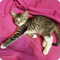 Adopt A Pet :: Mellie - Acworth, GA