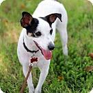 Adopt A Pet :: MRS. BEASLEY