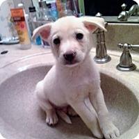 Adopt A Pet :: Phil - PENDING - Grafton, WI