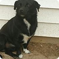 Corgi/Chihuahua Mix Dog for adoption in Shaw AFB, South Carolina - Big Mac