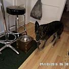Adopt A Pet :: Elke 4271