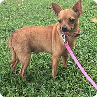 Adopt A Pet :: Pogo - Boca Raton, FL