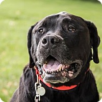 Adopt A Pet :: Tyson - Lowell, MA